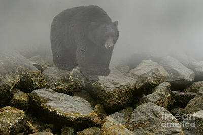 Photograph - Bearly Out Of The Fog by Myrna Bradshaw