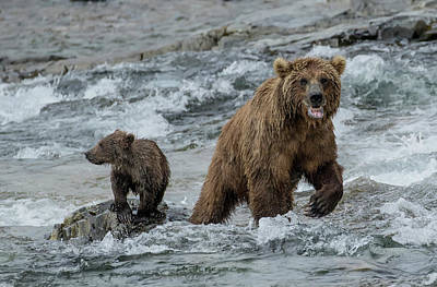 Photograph - Bears Being Watchful  by Cheryl Strahl