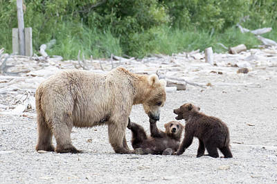 Photograph - Bears Fun Time by Phil Stone