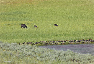 Photograph - Bears In Valley by Patricia Dennis