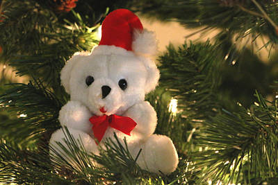 Photograph - Beary Christmas by Living Color Photography Lorraine Lynch