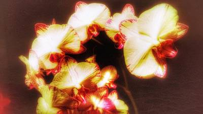 Art Print featuring the photograph Beautiful Orchid by Isabella F Abbie Shores FRSA