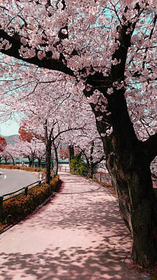 Trail Wall Art - Photograph - Beatiful Spring In Japan -road Filled With Cherry Blossom- by Roro Rop