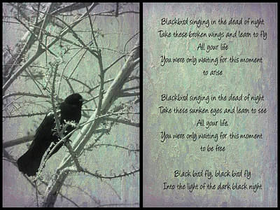 Photograph - Beatles Blackbird by Leslie Montgomery