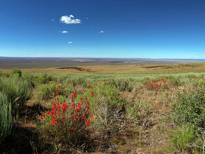 Photograph - Beaty Butte Summer by Leland D Howard
