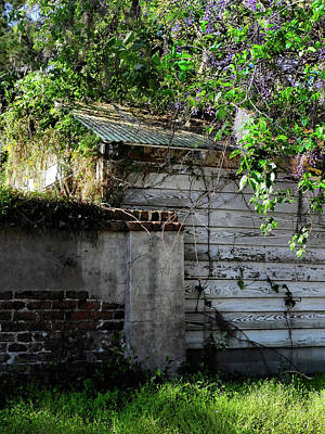 Photograph - Beaufort Backyard by Laura Ragland