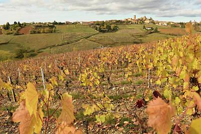 Photograph - Beaujolais Vineyard In Autumn by Robert Moss