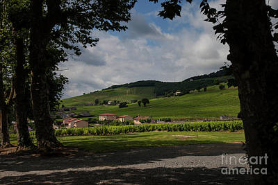 Beaujolais Vineyard Art Print