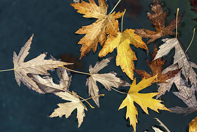 Photograph - Beauties Of The Autumn by Jonathan Nguyen