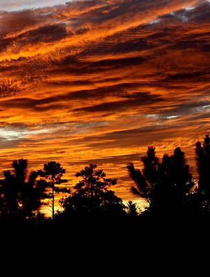 Photograph - Beautifil Sunset by Dana  Oliver