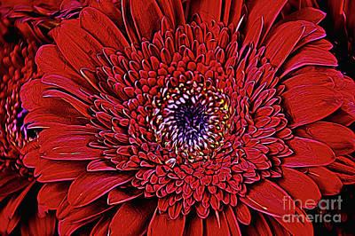 Photograph - Beautiful 1-10 by Ray Shrewsberry