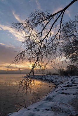 Photograph - Beautiful Aftermath Of An Ice Storm - Sunrise Through Frozen Branches by Georgia Mizuleva
