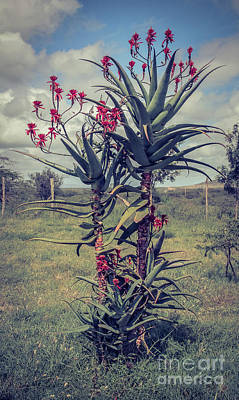 Photograph - Beautiful Aloe Plant In Savannah by Cami Photo
