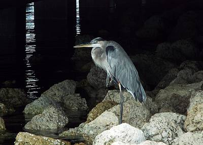 Photograph - Beautiful And Patience Heron by Cindy Croal