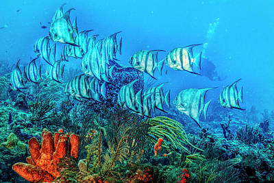Photograph - Beautiful Angels On The Reef In Hdr Detail by Debra and Dave Vanderlaan