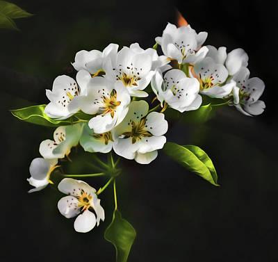 Photograph - Beautiful Apple Blossom Wall Art by Georgiana Romanovna