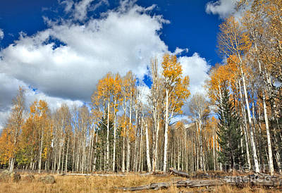 Photograph - Beautiful Aspen Grove by Robert Bales