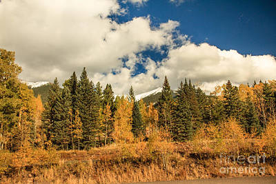 Photograph - Beautiful Aspen Loop Trail by Robert Bales