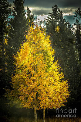 Photograph - Beautiful Aspen by Robert Bales