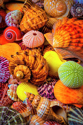Photograph - Beautiful Assortment Of Seashells by Garry Gay