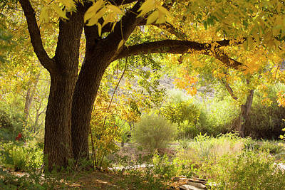 Photograph - Beautiful Autumn  by Sue Cullumber