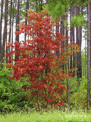 Photograph - Beautiful Autumn In Florida by D Hackett