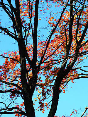 Photograph - Beautiful Backlit Orange Leaves Autumn by Mike M Burke