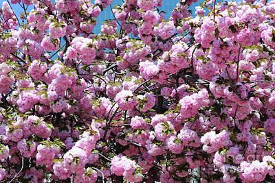 Photograph - Beautiful Baltimore Blossoms by Carol Groenen