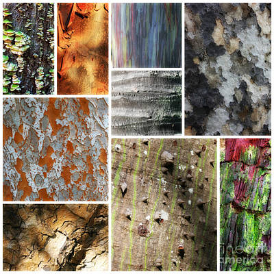 Photograph - Beautiful Bark Collage by Carol Groenen