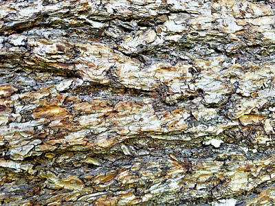 Digital Art - Beautiful Bark  by Susan Kinney