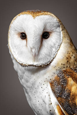 Fruits And Vegetables Still Life - Beautiful Barn Owl by Wes and Dotty Weber