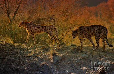 Desert Sunset Digital Art - Beautiful Big Cats Of The Living Desert by Sherri's Of Palm Springs