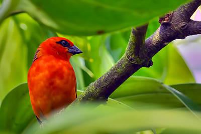 Photograph - Beautiful Birdie by Nadia Sanowar