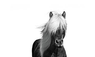 Beautiful Black And White Horse Art Prints Art Print by Wall Art Prints