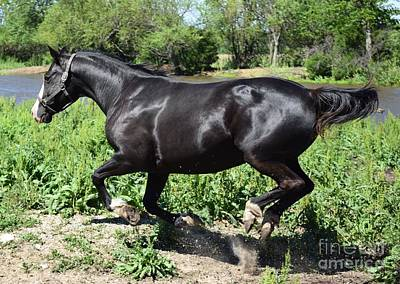 Photograph - Beautiful Black Horse by Mark McReynolds
