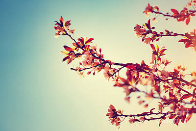 Photograph - Beautiful Blooming Tree Border by Anna Om