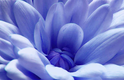 Photograph - Beautiful Blue 2 by Johanna Hurmerinta