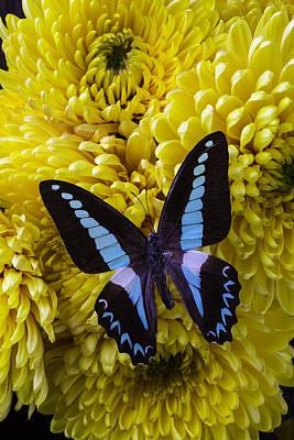 Beautiful Blue Black Butterfly Art Print