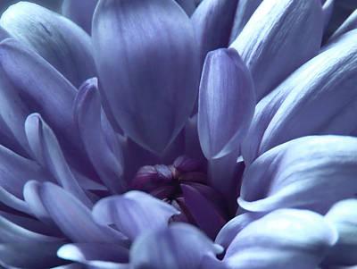Photograph - Beautiful Blue by Johanna Hurmerinta