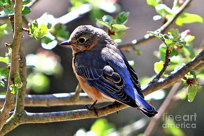 Photograph - Beautiful Blue by Marle Nopardi
