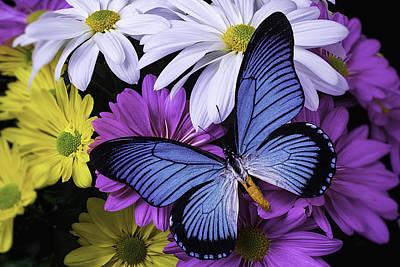 Gerbera Daisy Photograph - Beautiful Blue Wings by Garry Gay