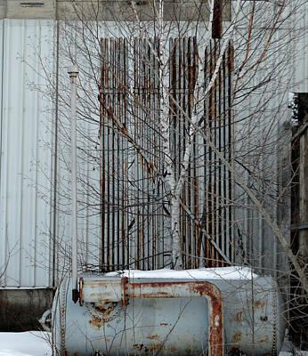 Photograph - Beautiful Bright And Birch by Cyryn Fyrcyd