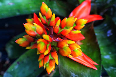 Photograph - Beautiful Bromeliad by L L