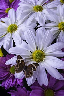 Gerbera Daisy Photograph - Beautiful Brown Butterfly by Garry Gay