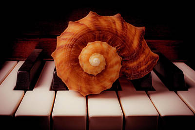 Keyboards Photograph - Beautiful Brown Shell by Garry Gay