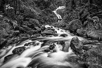 Beautiful Bunch Creek Falls In The Olympic National Park Art Print