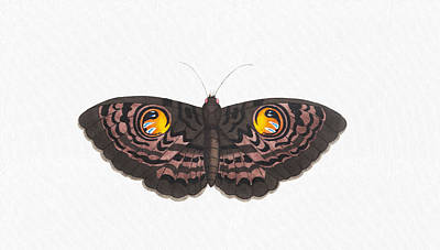 Drawing - Beautiful Butterfly Art - Colorful Ox-eye Moth Butterfly by Wall Art Prints
