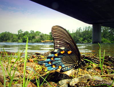 Photograph - Beautiful Butterfly At The River II by Joyce Dickens