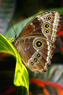 Beautiful Butterfly Art Print by John Greaves