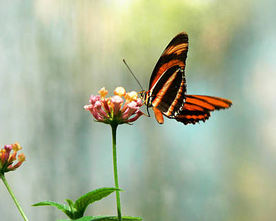 Photograph - Beautiful Butterfly by Laurel Powell